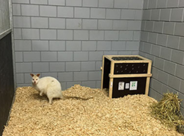 Schiphol Animal Centre geeft alle dieren een VIP-behandeling op Schiphol